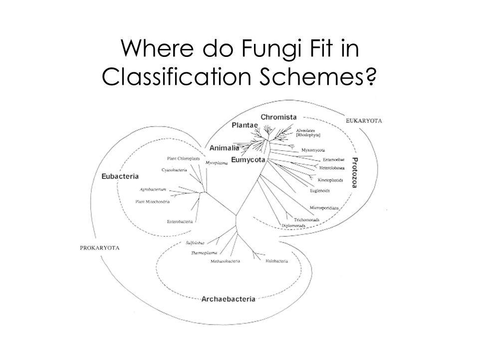 Where do Fungi Fit in Classification Schemes