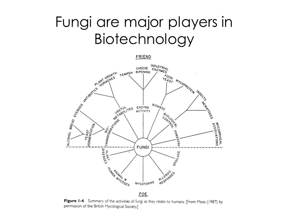 Fungi are major players in Biotechnology