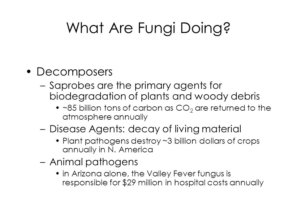 What Are Fungi Doing Decomposers