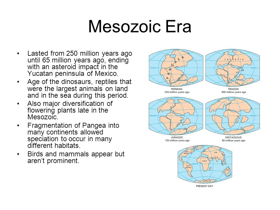 Mesozoic Era Lasted from 250 million years ago until 65 million years ago, ending with an asteroid impact in the Yucatan peninsula of Mexico.