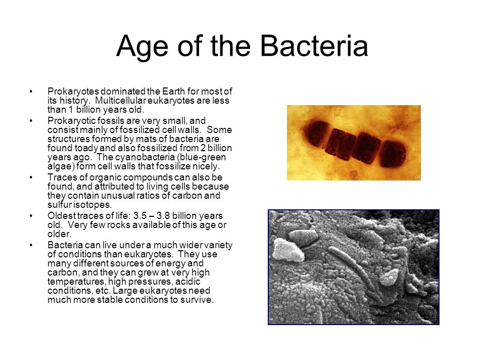 Age of the Bacteria Prokaryotes dominated the Earth for most of its history. Multicellular eukaryotes are less than 1 billion years old.