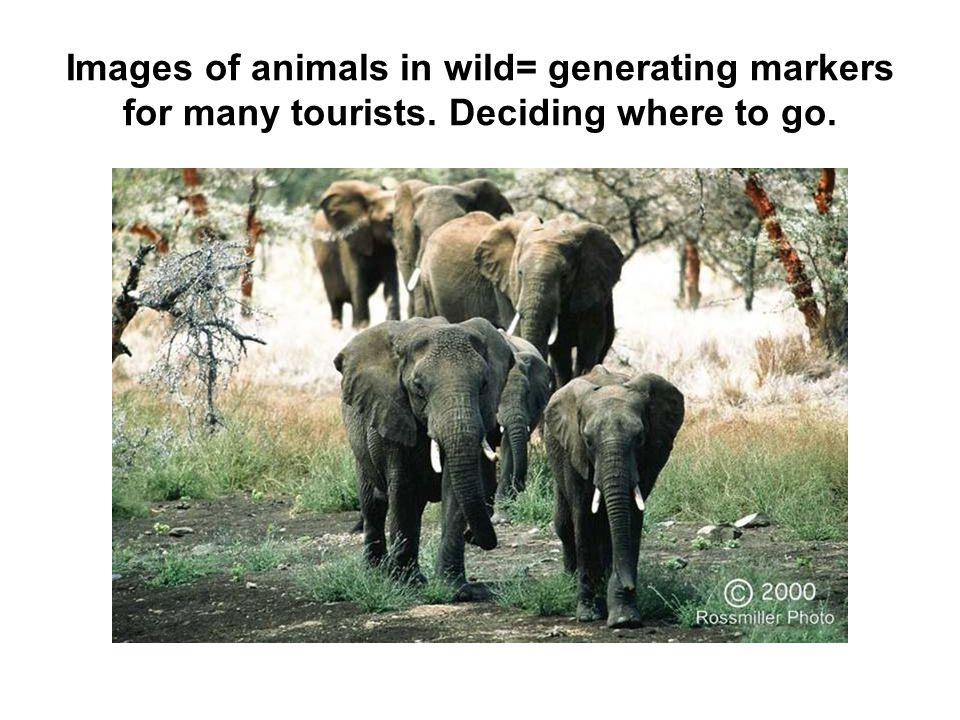 Images of animals in wild= generating markers for many tourists