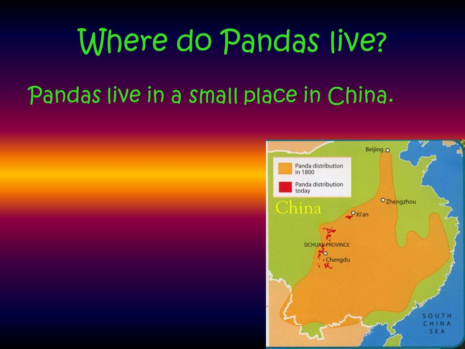 Where do Pandas live Pandas live in a small place in China.