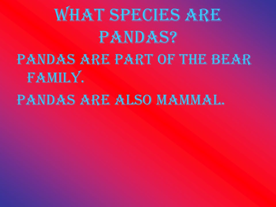 What species are pandas