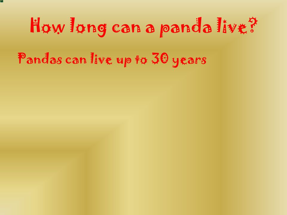 How long can a panda live