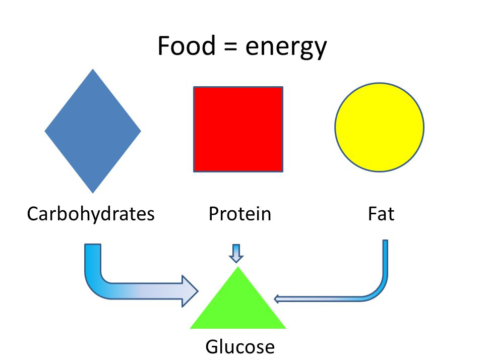 Food = energy Carbohydrates Protein Fat Glucose