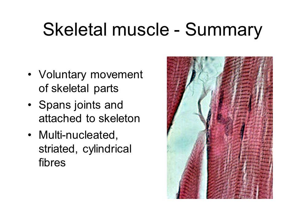 Skeletal muscle - Summary
