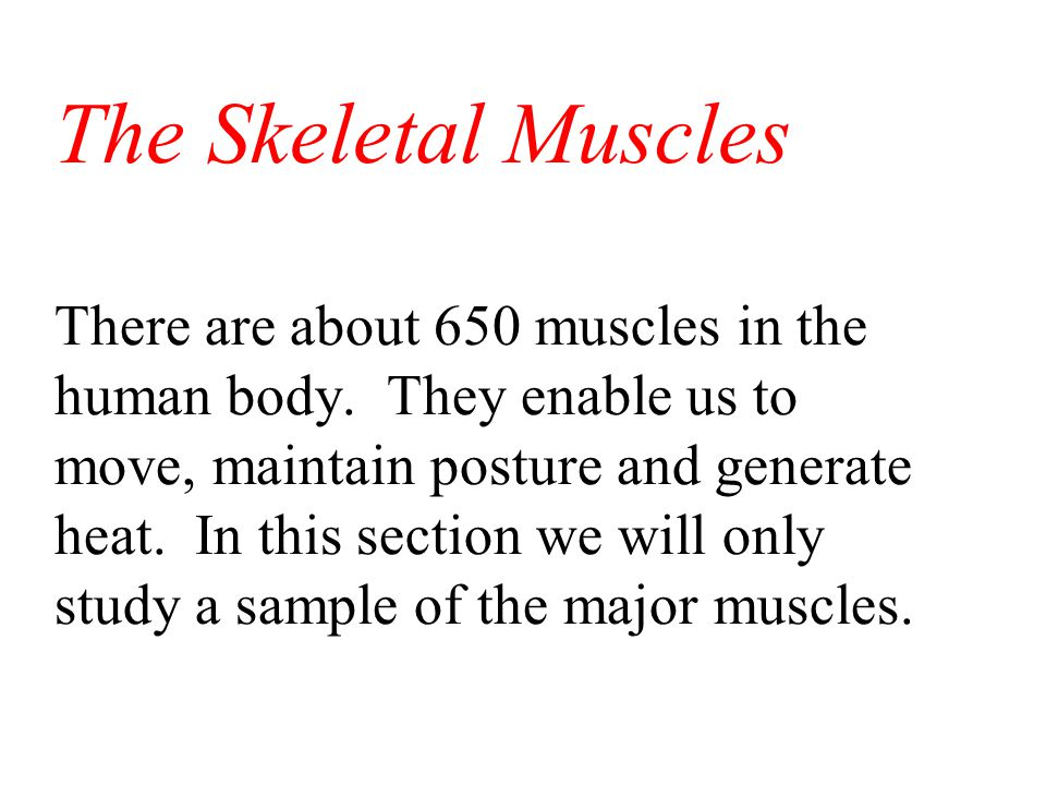 The Skeletal Muscles There are about 650 muscles in the human body