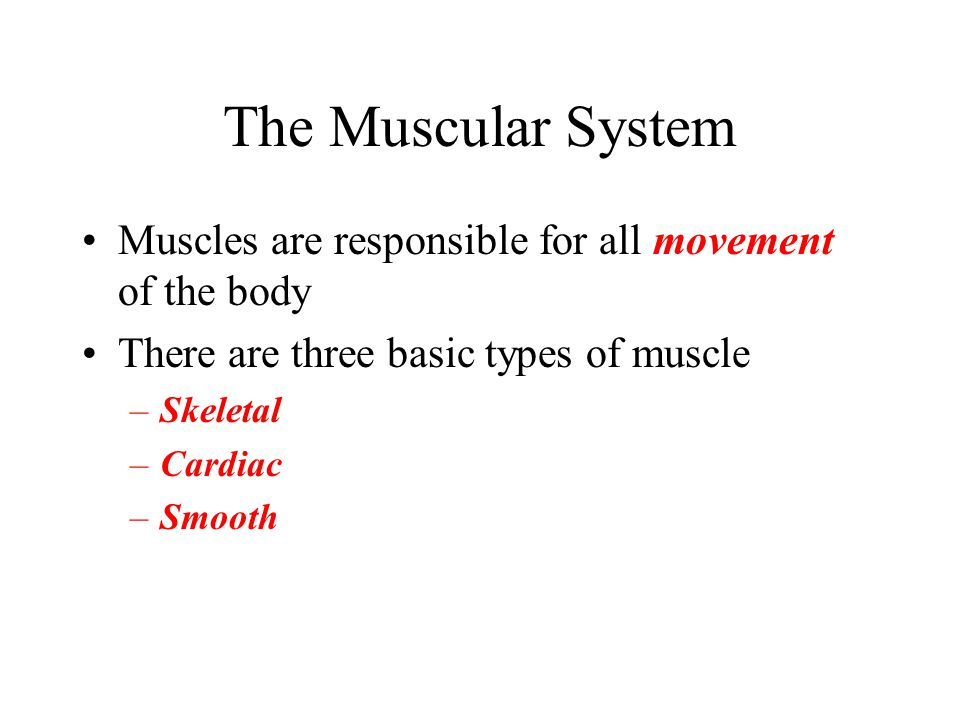 The Muscular System Muscles are responsible for all movement of the body. There are three basic types of muscle.