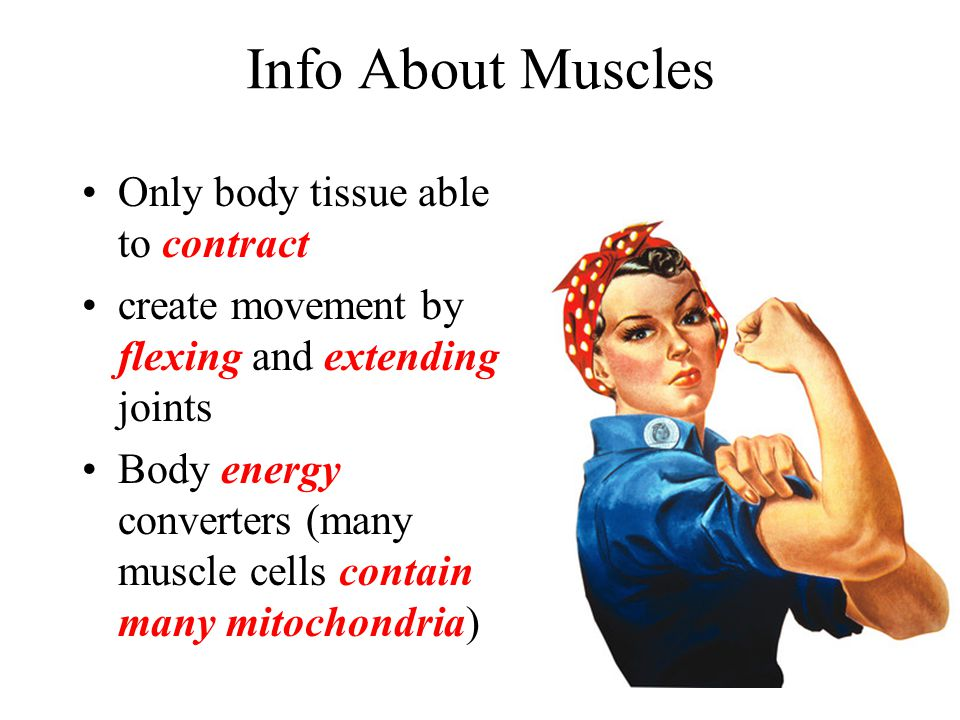 Info About Muscles Only body tissue able to contract