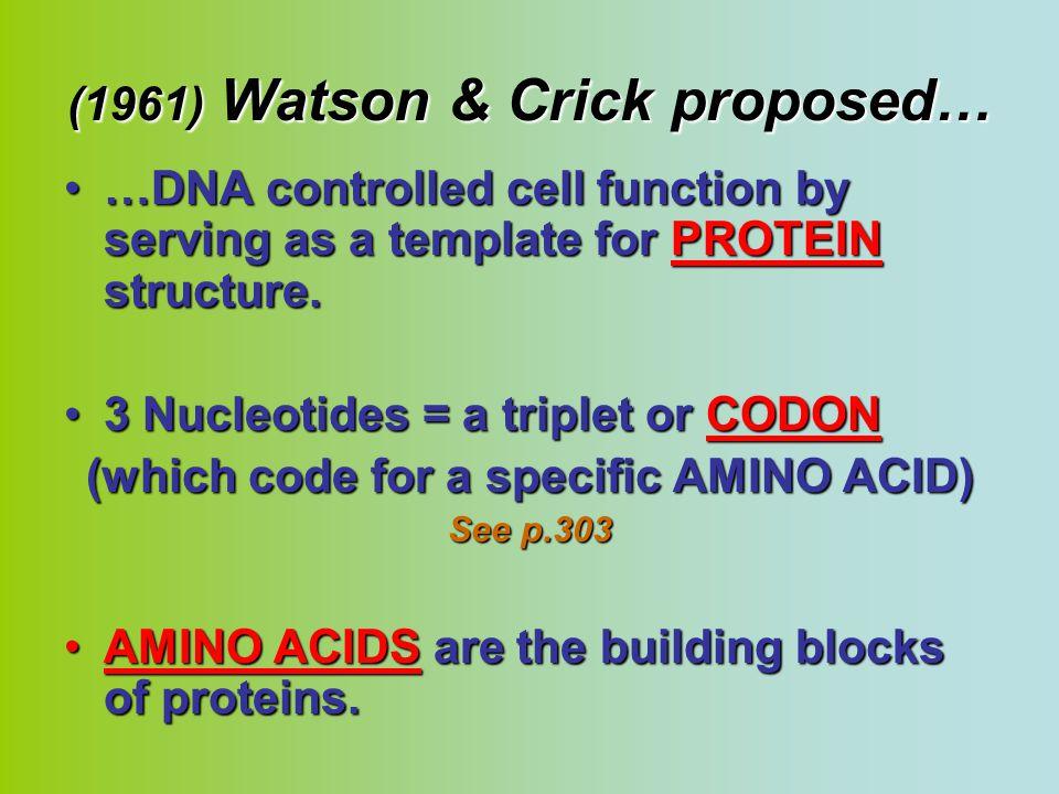 (1961) Watson & Crick proposed…