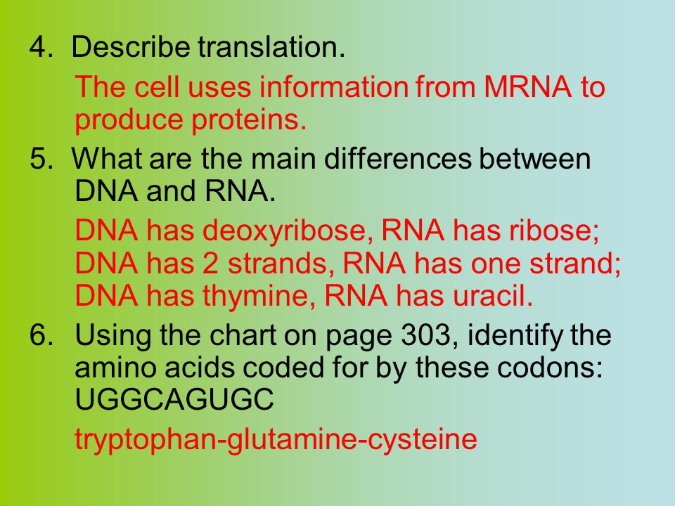 4. Describe translation. The cell uses information from MRNA to produce proteins. 5. What are the main differences between DNA and RNA.