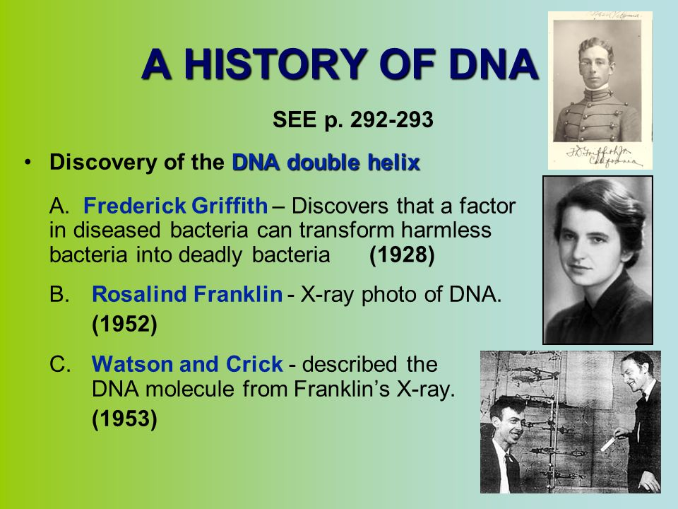 A HISTORY OF DNA SEE p. 292-293 Discovery of the DNA double helix