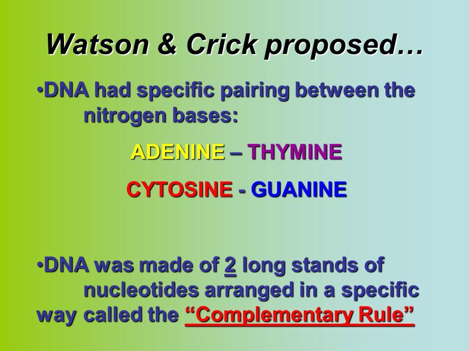 Watson & Crick proposed…