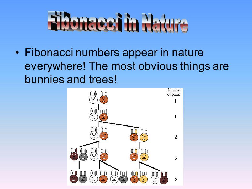 Fibonacci in Nature Fibonacci numbers appear in nature everywhere.