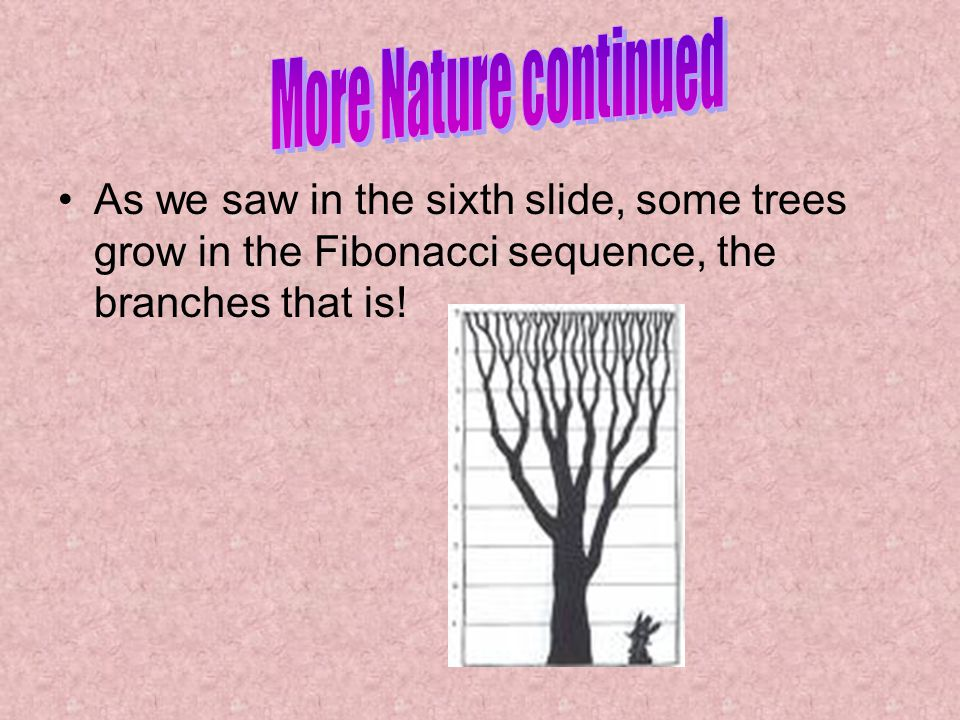 More Nature continued As we saw in the sixth slide, some trees grow in the Fibonacci sequence, the branches that is!