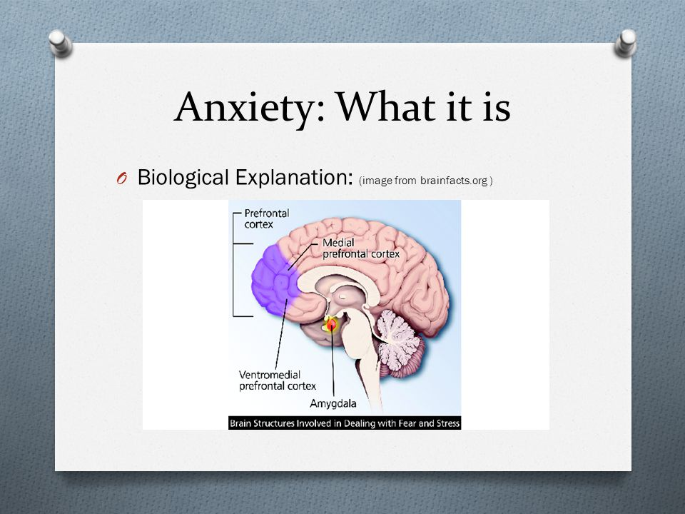 Anxiety: What it is Biological Explanation: (image from brainfacts.org )