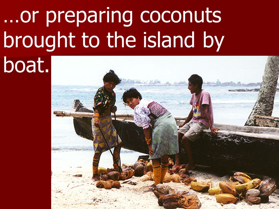 …or preparing coconuts brought to the island by boat.