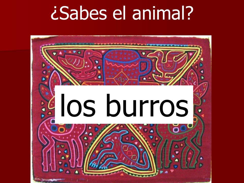 ¿Sabes el animal los burros