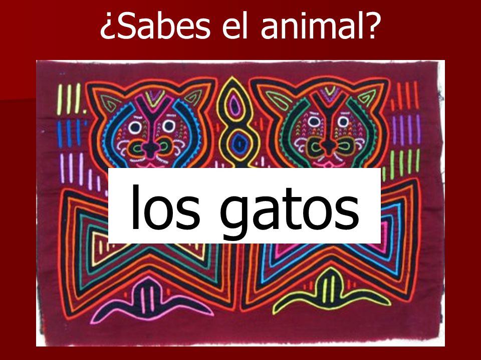¿Sabes el animal los gatos