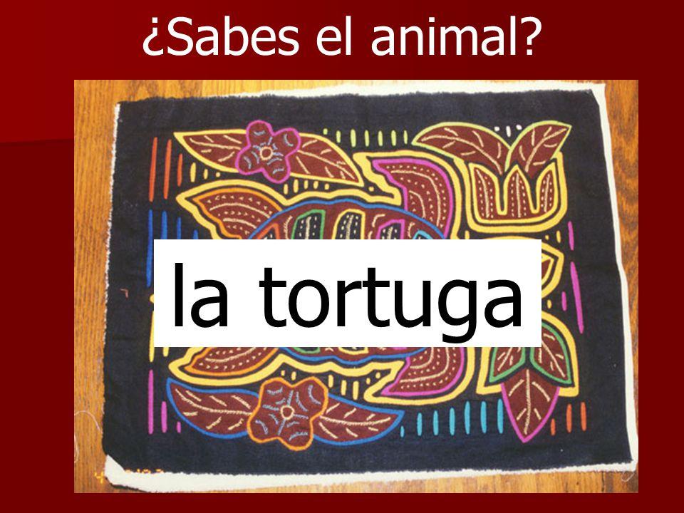 ¿Sabes el animal la tortuga