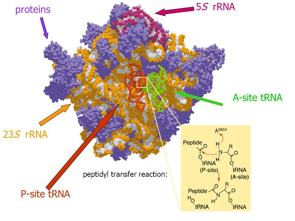 peptidyl transfer reaction: