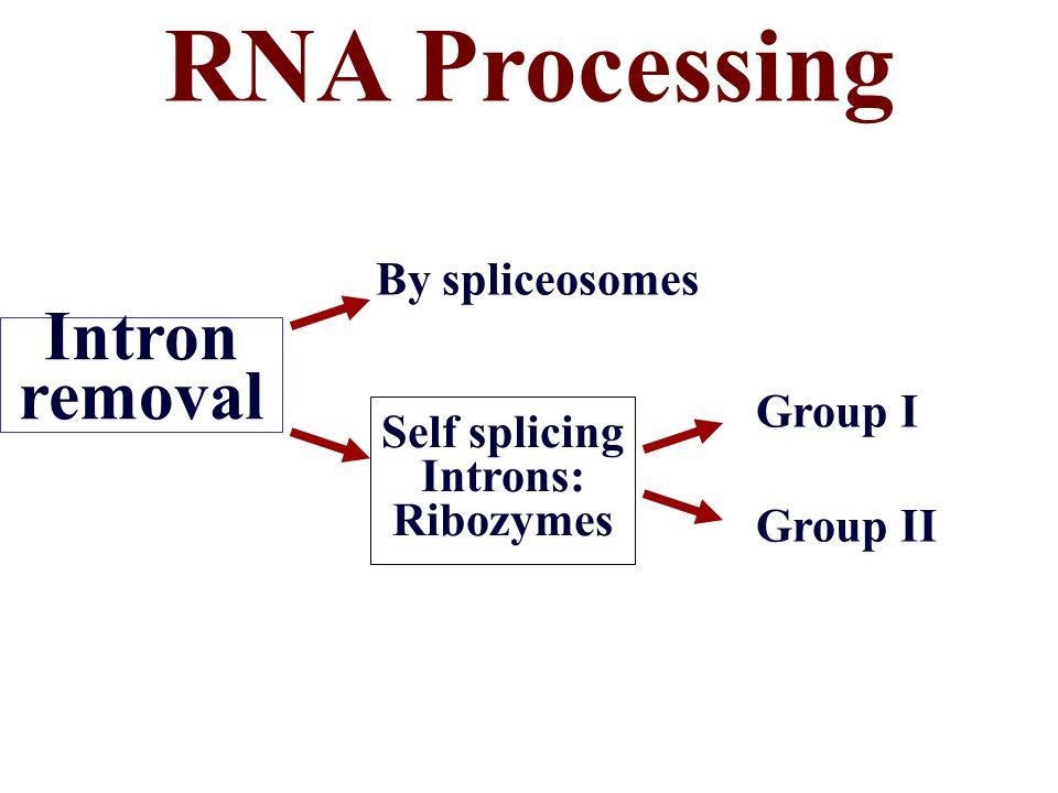 RNA Processing Intron removal By spliceosomes Group I Self splicing