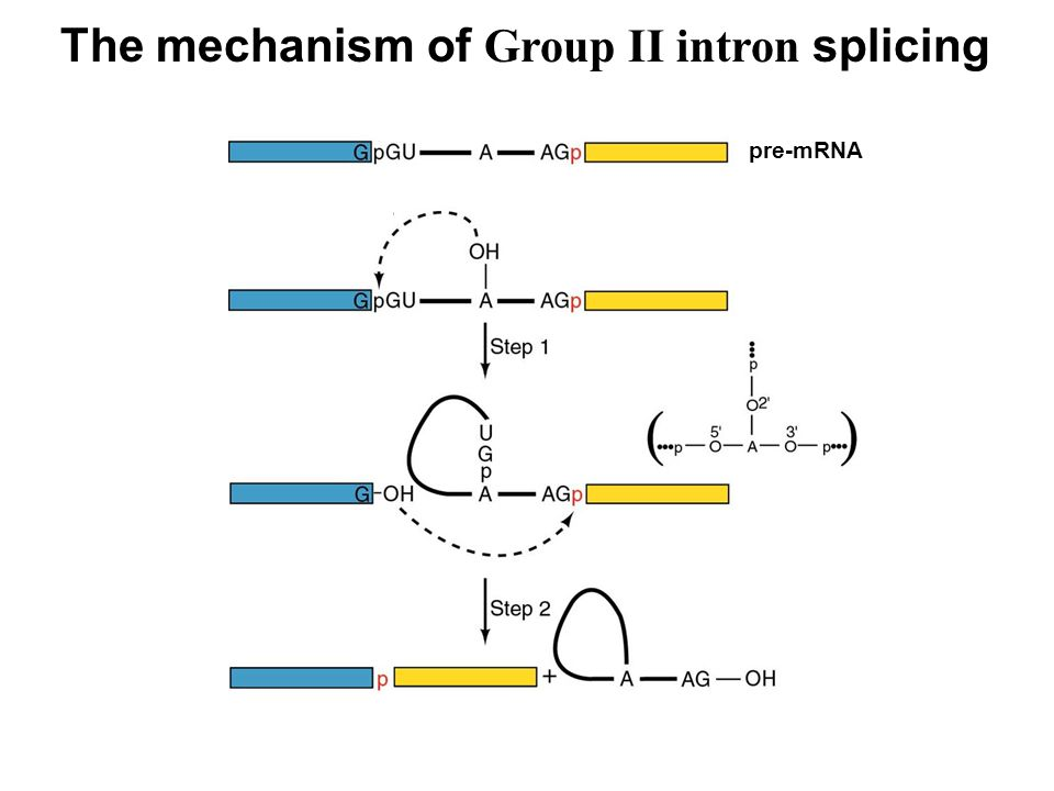 The mechanism of Group II intron splicing