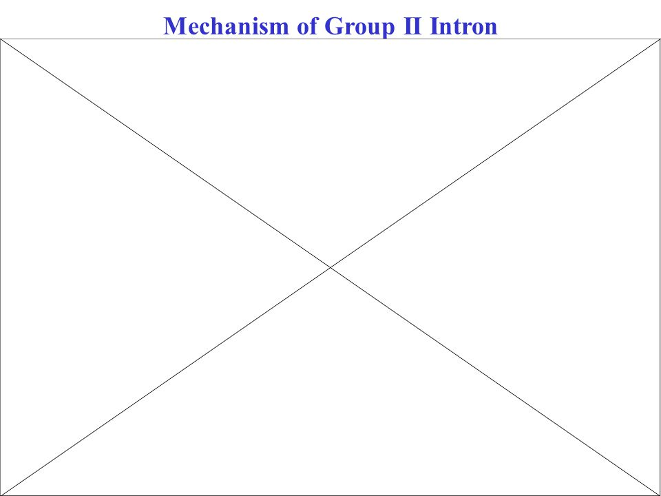 Mechanism of Group II Intron