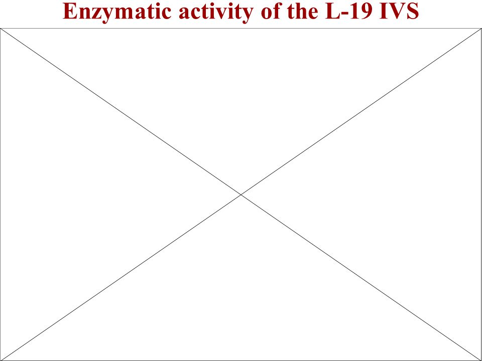 Enzymatic activity of the L-19 IVS