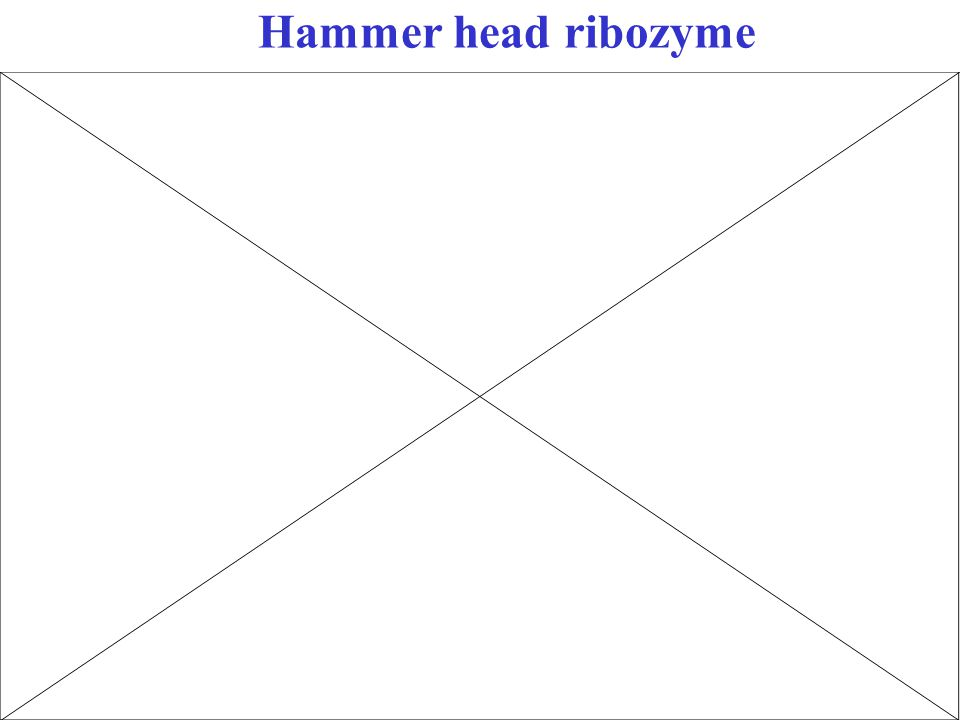 Hammer head ribozyme