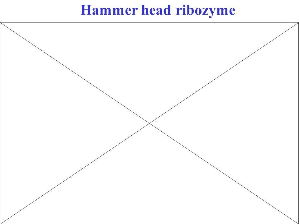 Hammer head ribozyme
