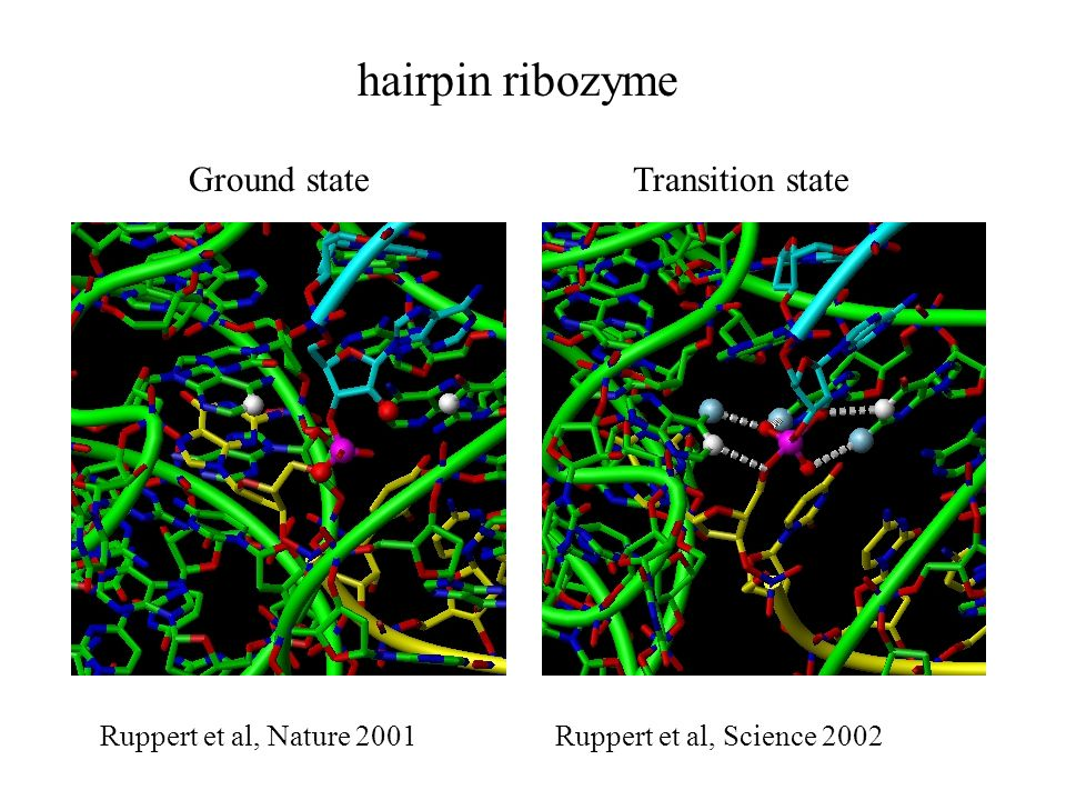 hairpin ribozyme Ground state Transition state