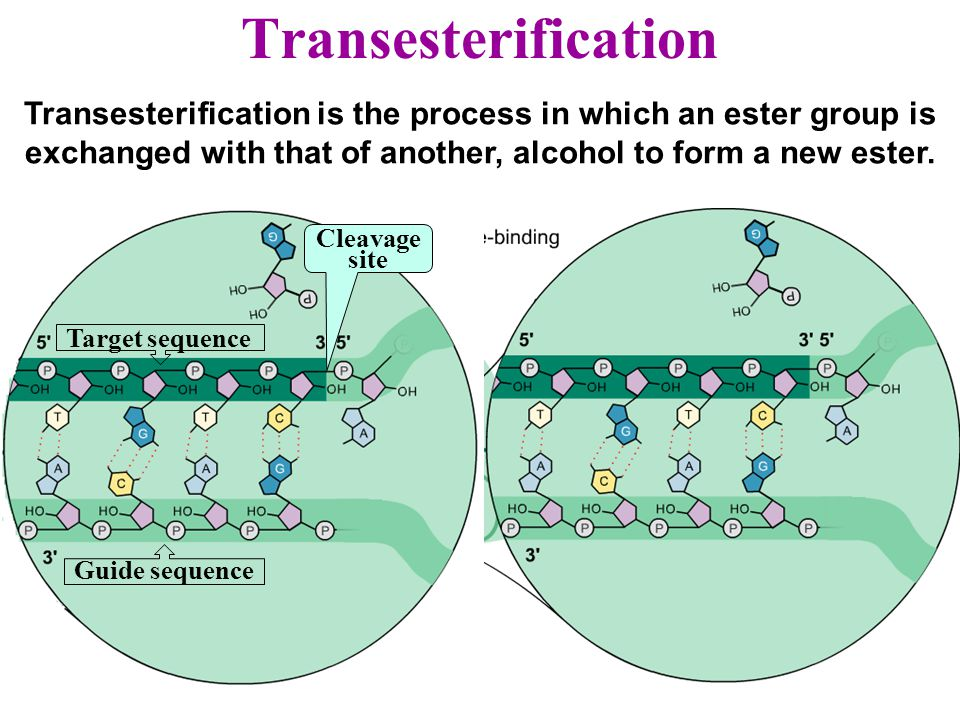 Transesterification Transesterification is the process in which an ester group is exchanged with that of another, alcohol to form a new ester.
