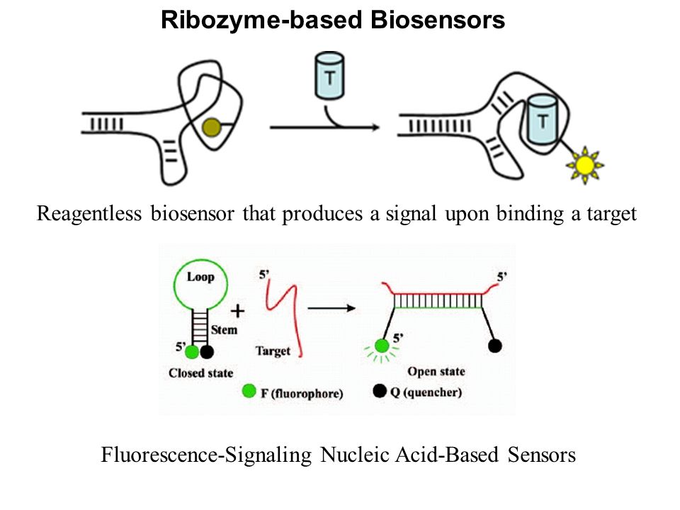 Ribozyme-based Biosensors