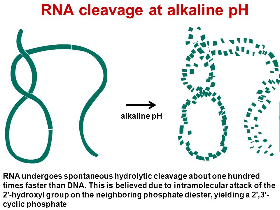 RNA cleavage at alkaline pH