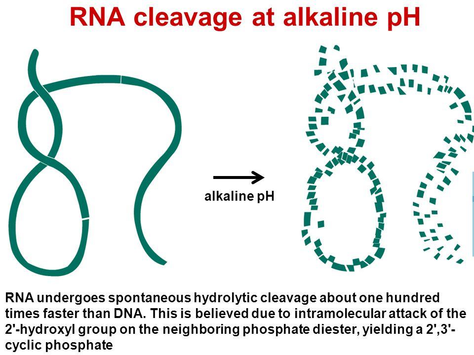 RNA cleavage at alkaline pH
