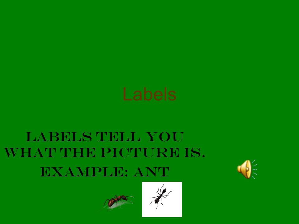 Labels tell you what the picture is. Example: ant