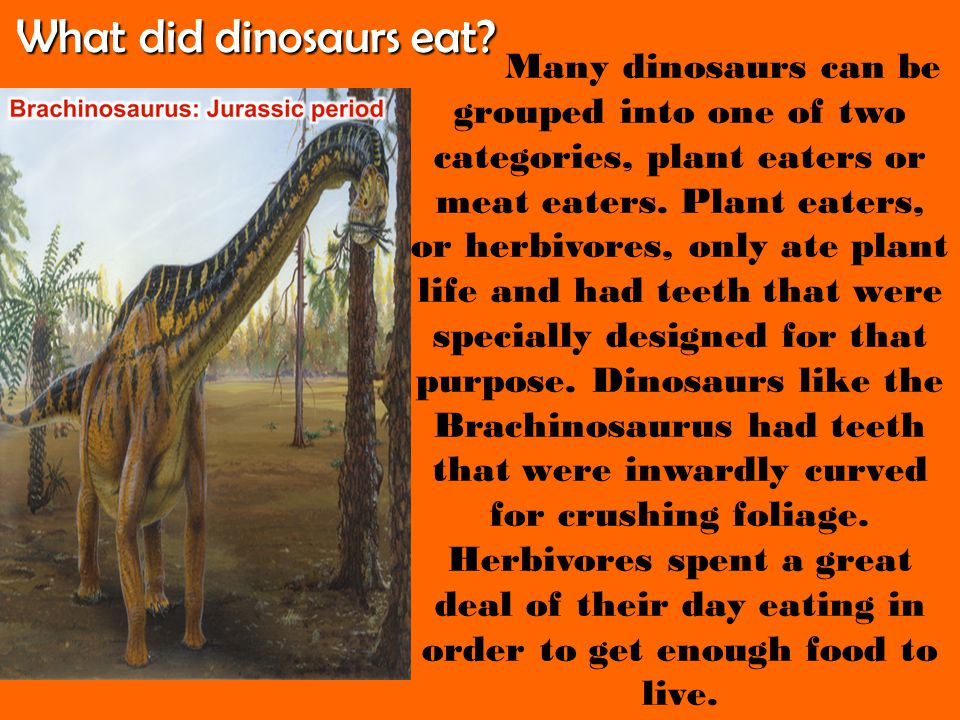 What did dinosaurs eat Many dinosaurs can be grouped into one of two categories, plant eaters or.