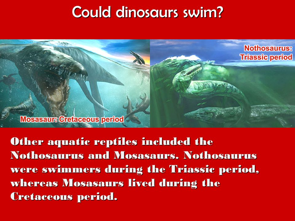 Could dinosaurs swim