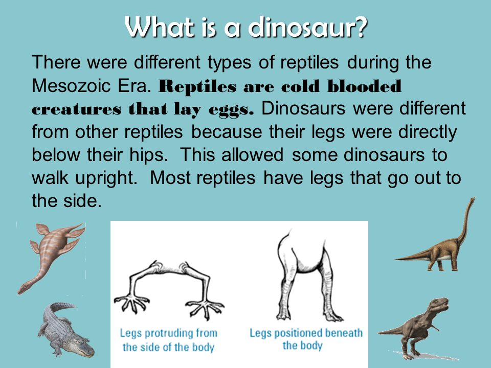 What is a dinosaur