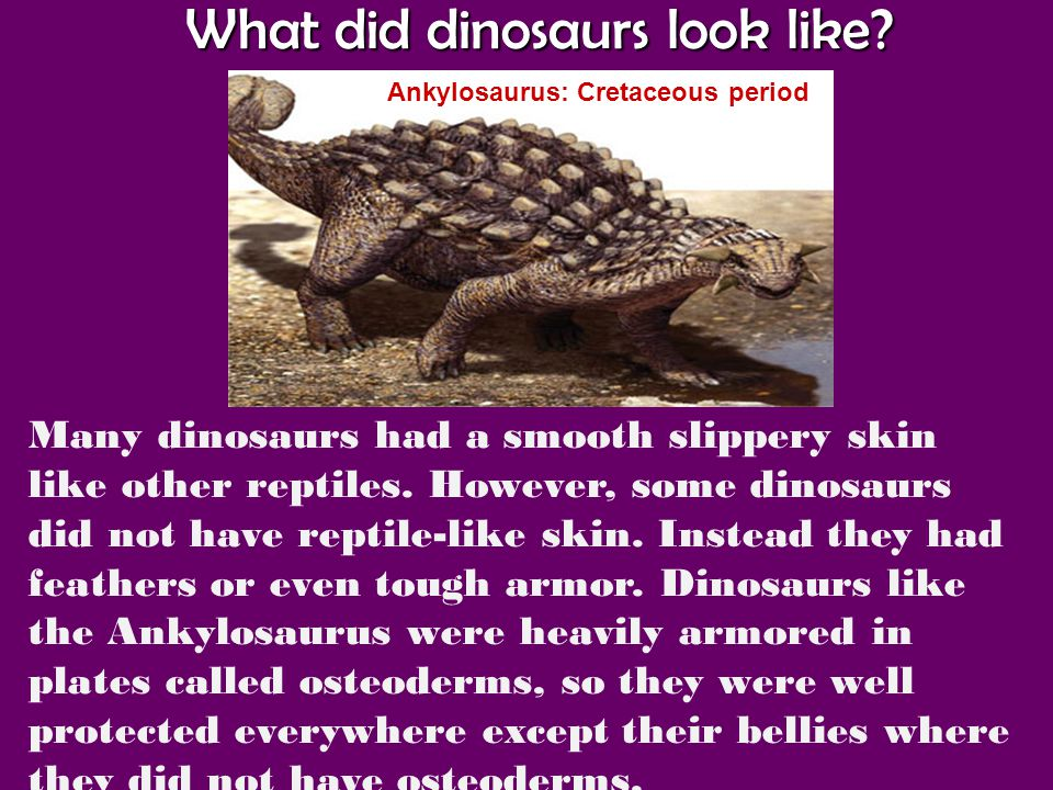 What did dinosaurs look like