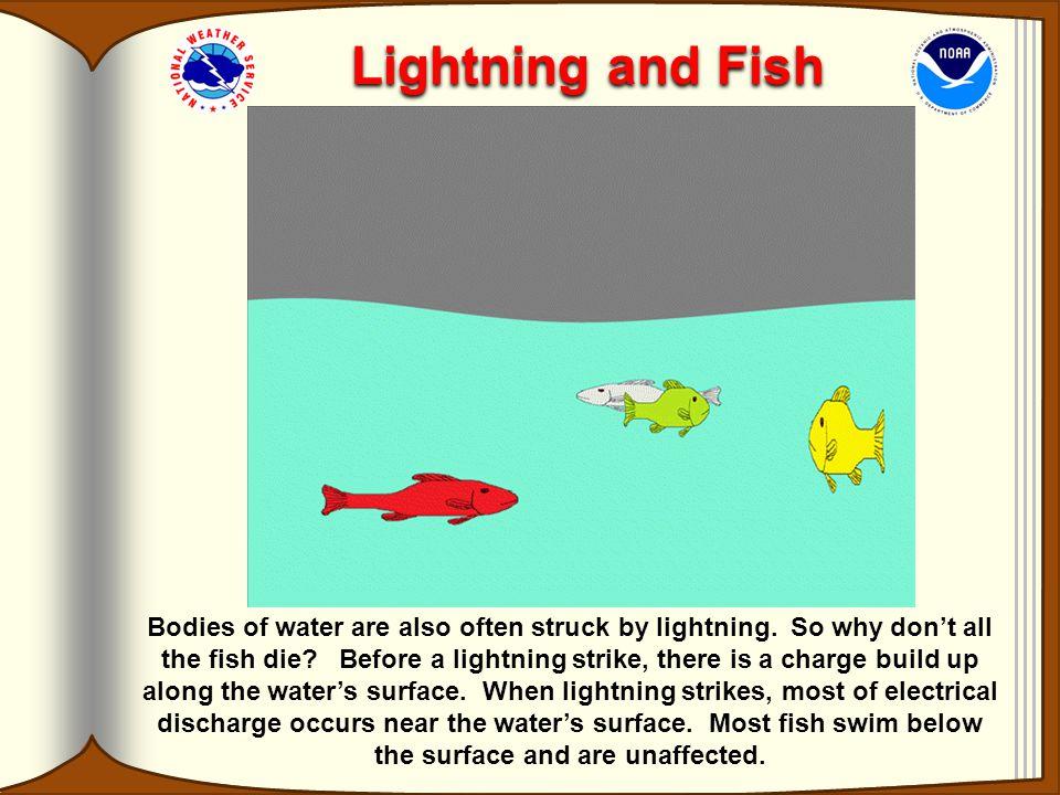 Lightning and Fish
