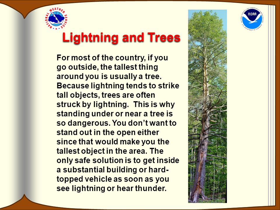 Lightning and Trees