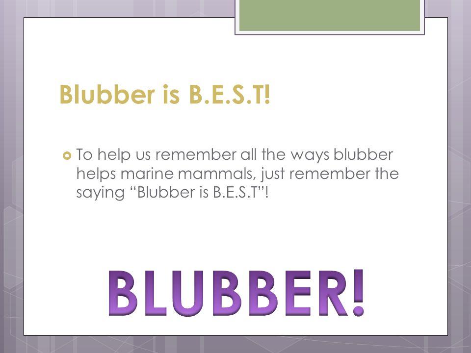 BLUBBER! Blubber is B.E.S.T!
