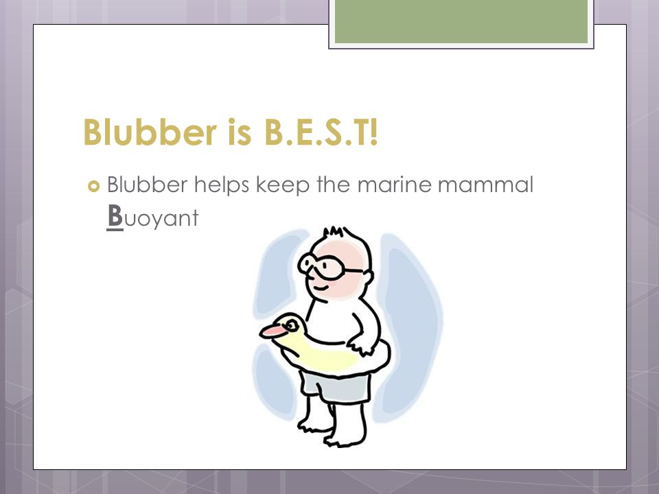 Blubber is B.E.S.T! Blubber helps keep the marine mammal Buoyant