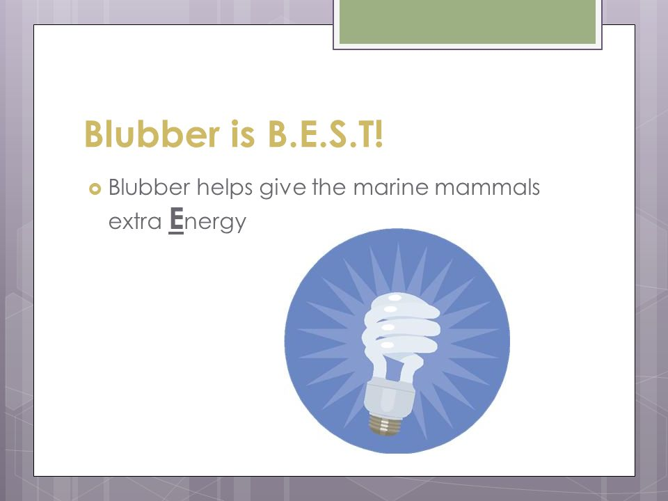 Blubber is B.E.S.T! Blubber helps give the marine mammals extra Energy