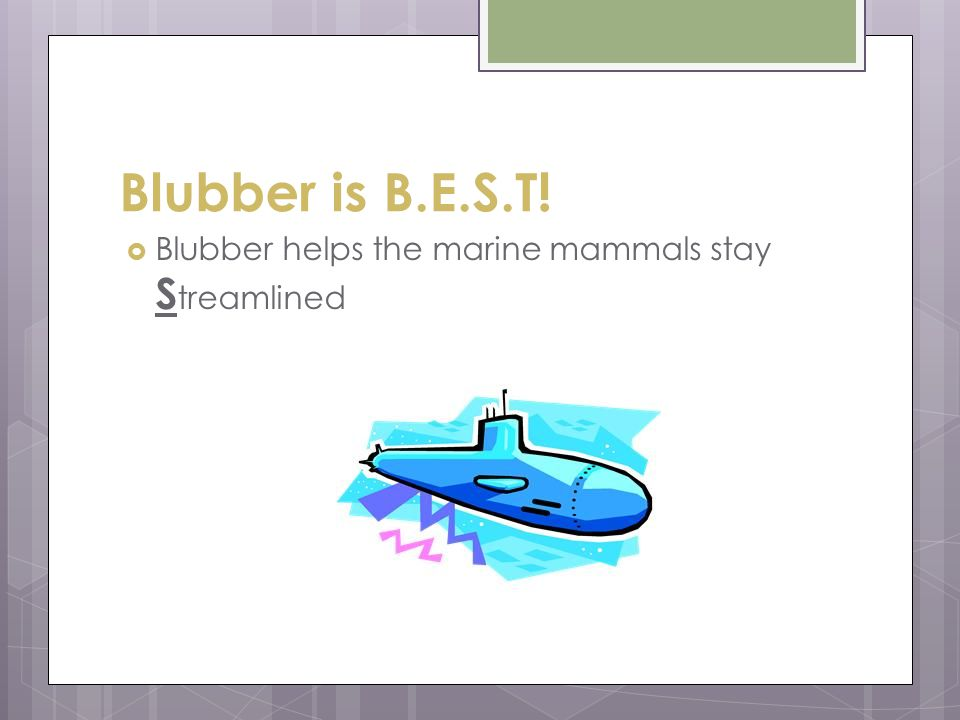 Blubber is B.E.S.T! Blubber helps the marine mammals stay Streamlined