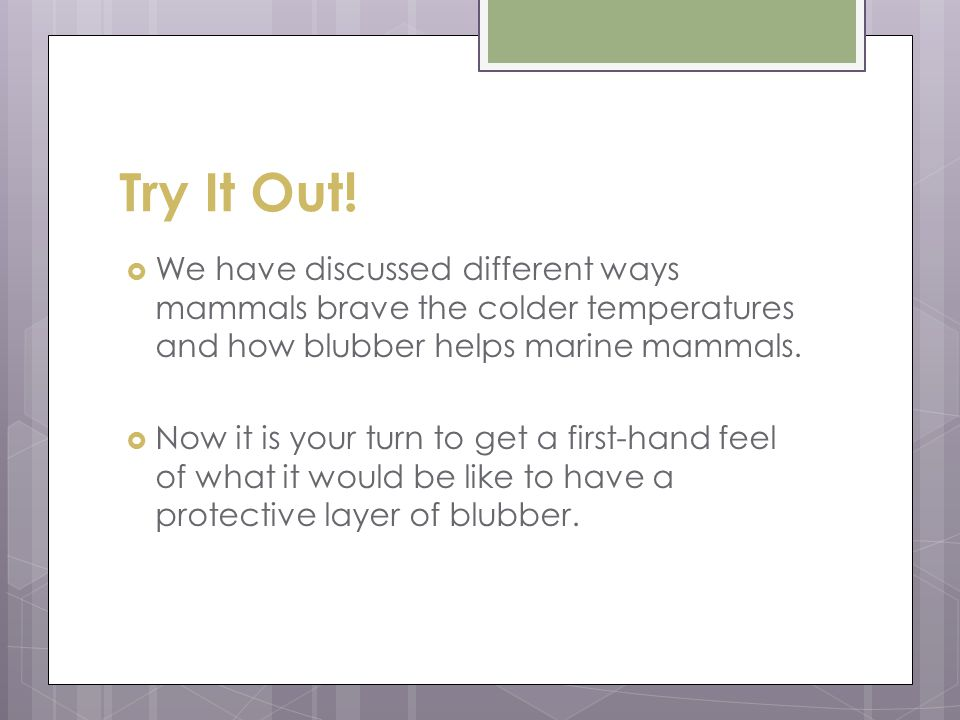 Try It Out! We have discussed different ways mammals brave the colder temperatures and how blubber helps marine mammals.