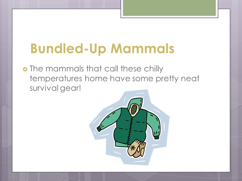 Bundled-Up Mammals The mammals that call these chilly temperatures home have some pretty neat survival gear!